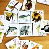 Alphabet and World Animals Magnets - Made in Canada